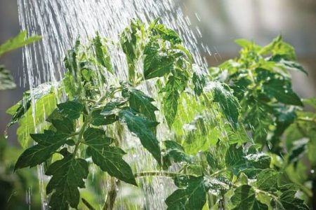 Plants and Softened Water
